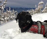 """美加州搜救犬""""飞一般""""愉快滑雪可爱无比"""