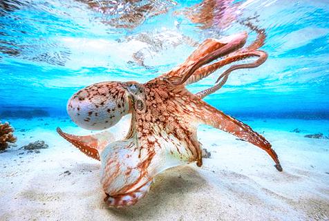 水下摄影大赛获奖作品美得令人窒息