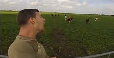 外国小哥打嗝自带召唤技能 仰天长啸叫来13头牛