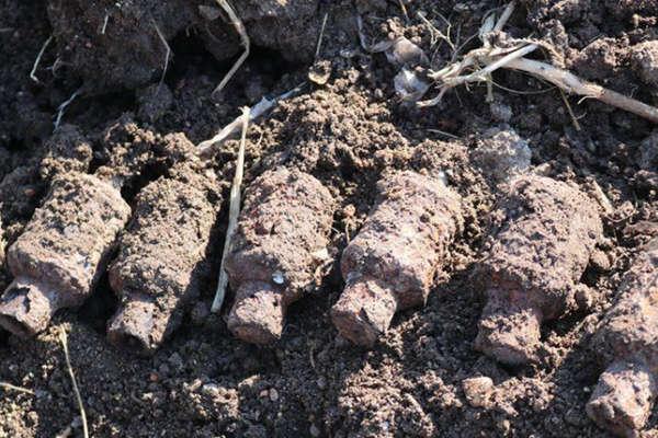 黑龙江一村民整修河道时挖出6枚疑似日伪时期手雷
