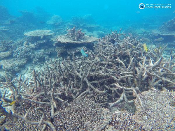 研究表明要想保护珊瑚礁需对海洋进行降温