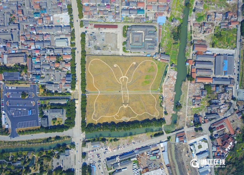 浙江宁波建巨大蝴蝶花田景观 占地3万余平米