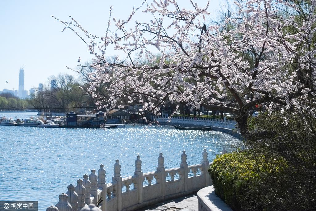 北京什刹海春意盎然 碧水蓝天风景美如画