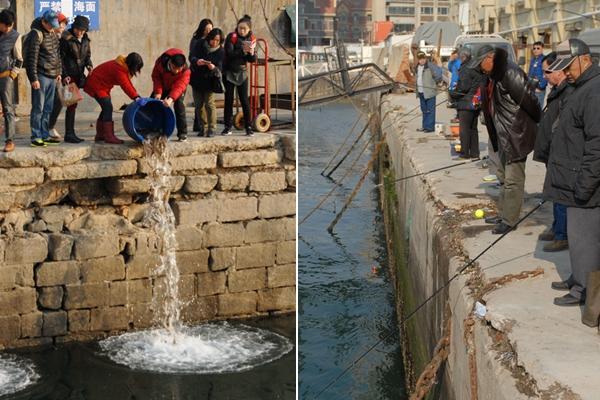 青岛码头放生海鱼引市民扎堆垂钓