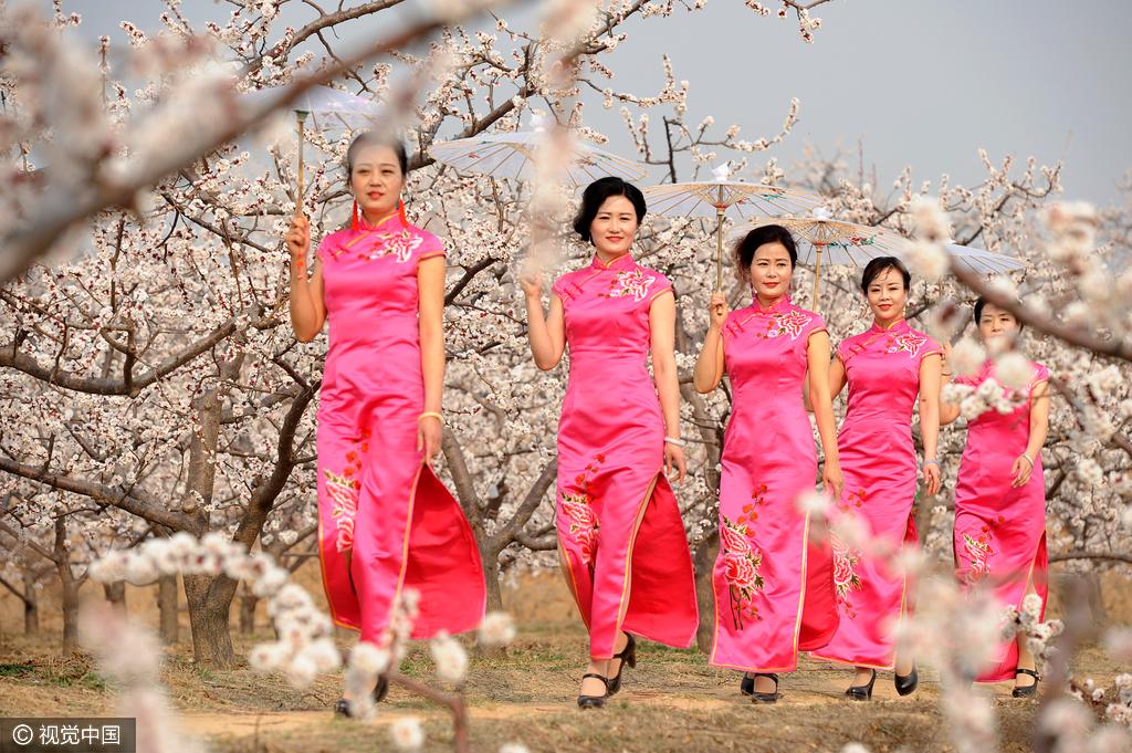 山西大妈秀旗袍与春色争艳