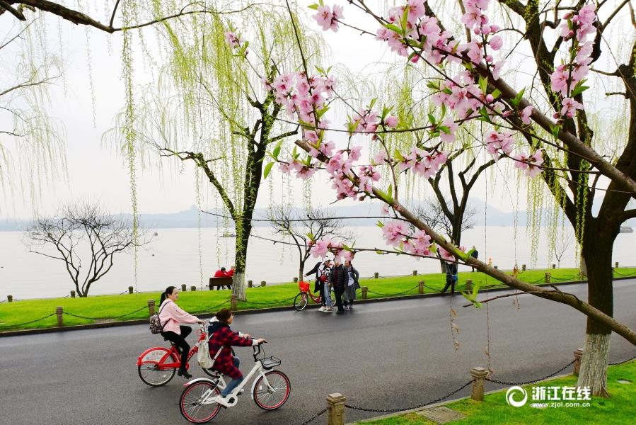 杭州:春色挡不住 桃红柳绿堤