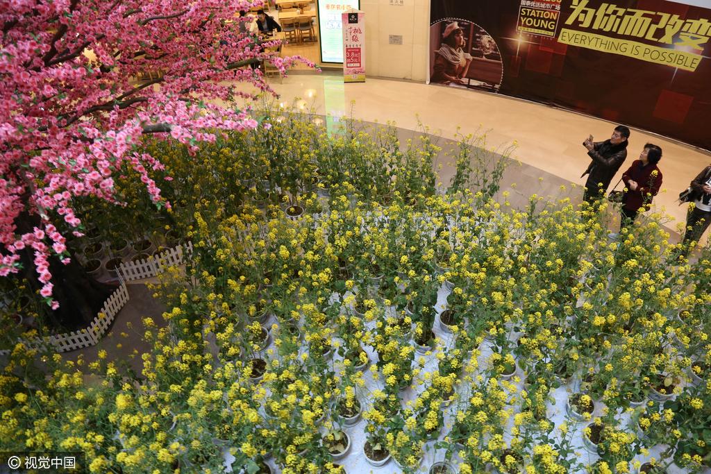 重庆一商场将3000平米油菜花搬进室内 逛街如郊游