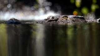 澳少年落水遭鳄鱼袭击 被咬伤左臂后奇迹逃脱