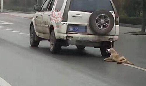 """大黄狗被绑车后残忍拖行 男子虐狗遭网友""""通缉"""""""