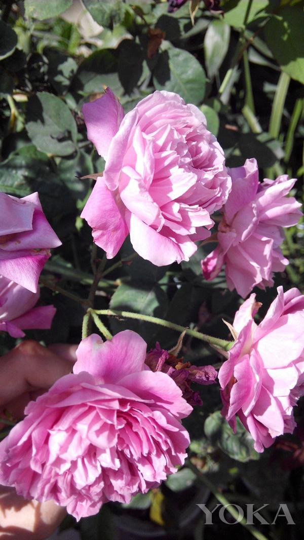 冬去春来 让花香时刻萦绕你身旁