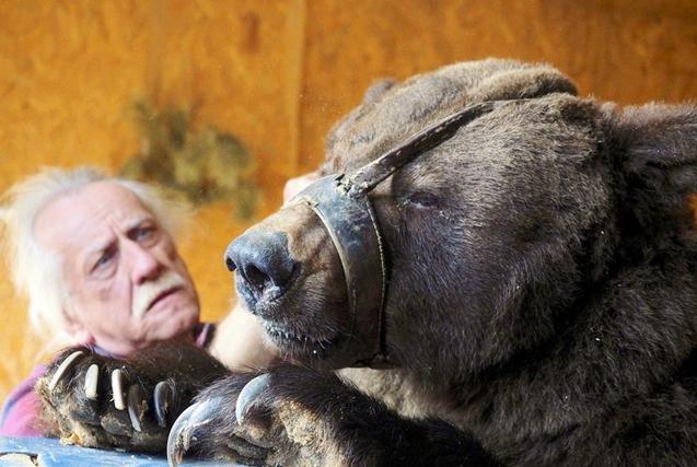 俄失业驯兽师与两只熊生活 相依为命