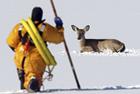 小鹿被困结冰湖面终获救