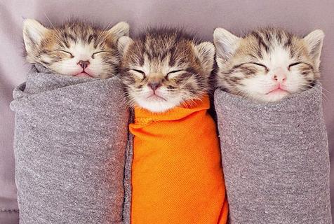 世界睡眠日:动物可爱睡姿萌化人心