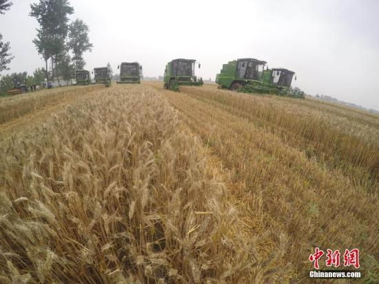 农业部:2018年救灾备荒种子储备总量5000万公斤