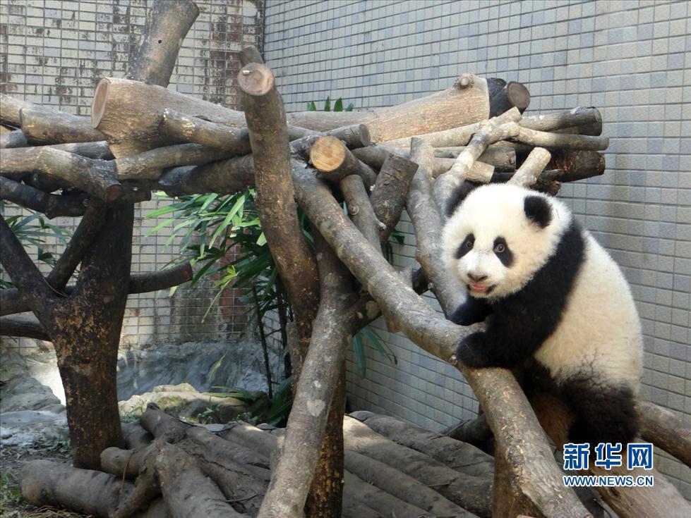 新华社发(台北市动物园提供)
