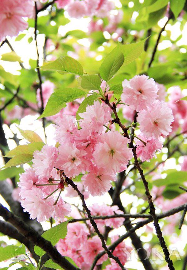 樱花季又来 外出度假 如何给化妆包减负