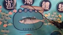 """台湾创客""""洄游""""家乡"""