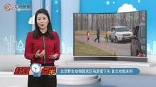 北京野生动物园虎区有游客下车首次劝阻未听