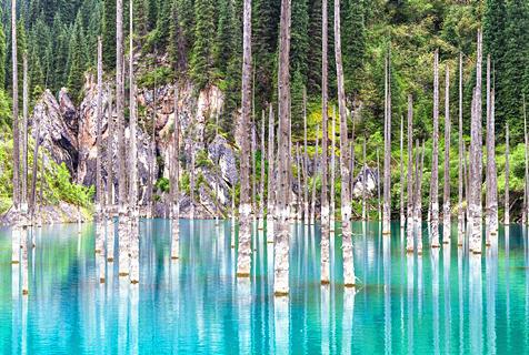 惊艳绝伦!全球最美森林令人叹服