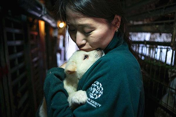 韩肉狗养殖场关停 55只获救狗狗将赴美开始新生活