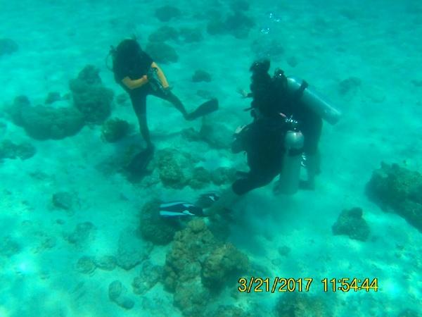泰媒:韩国游客为拍美照践踏海底珊瑚 泰警方将实施逮捕
