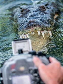 """两游客水下与鳄鱼""""亲密""""面对面"""