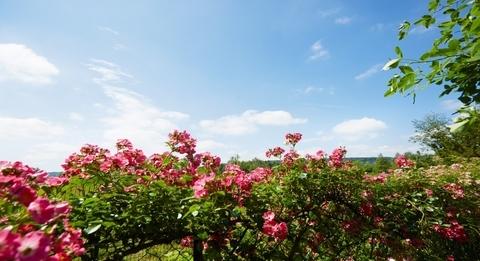 春天身体乳测评丨身体肌肤症状大作战,香味与效果我都要!