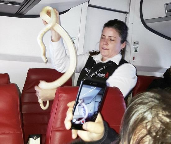 美国一通勤飞机上惊现大蛇 乘务员徒手捕捉