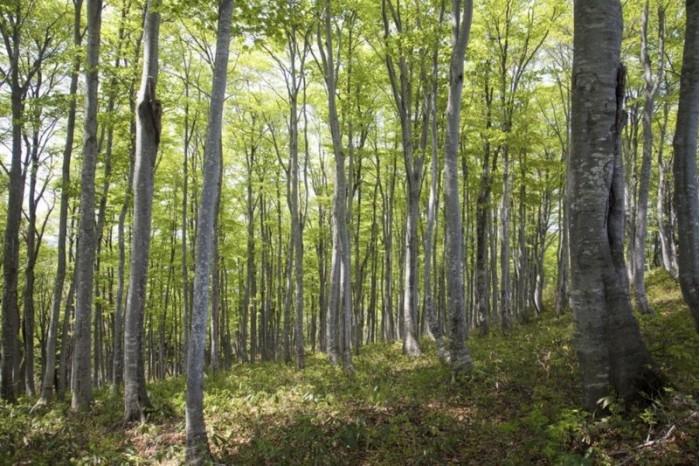 苹果公司买下森林的做法会带动一股新潮流吗?