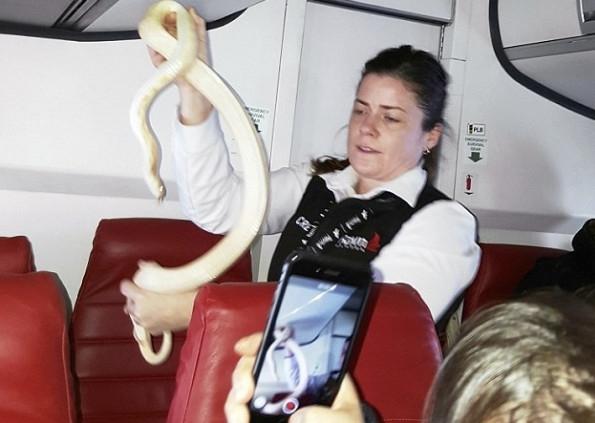 飞机上惊现白色蟒蛇吓坏乘客:空姐徒手捕捉