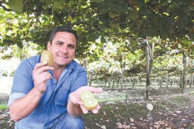 智利 跃升中国第一大水果来源地