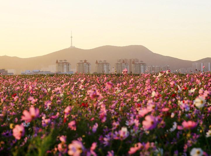 安徽淮北:一座传统工业城市的转型崛起纪实