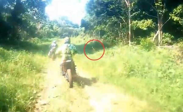 印尼丛林闪出神秘野人:手持长棍比摩托车还快