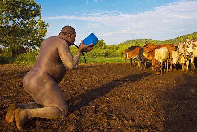 埃塞俄比亚部落以胖为美男人喝牛血增肥