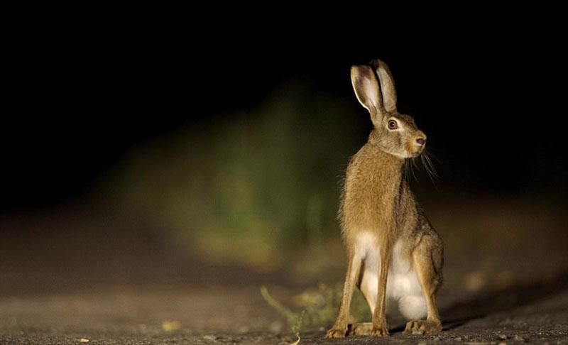 切尔诺贝利核禁区成濒危物种繁衍地