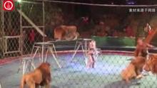 马戏团狮子发狂撕咬驯兽员