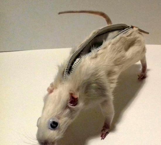 大学生用老鼠尸体制作笔袋 受万千网友指责