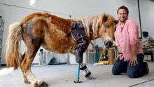 小马前腿落残疾装义肢获新生