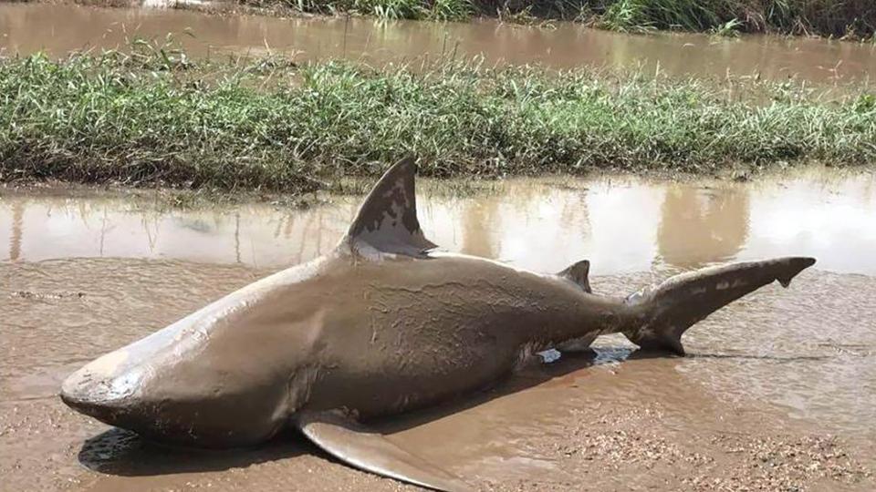 超强气旋袭击澳大利亚 鲨鱼被冲上马路