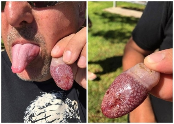 男子澳洲海滩无意发现神秘生物:这外形真是酸爽