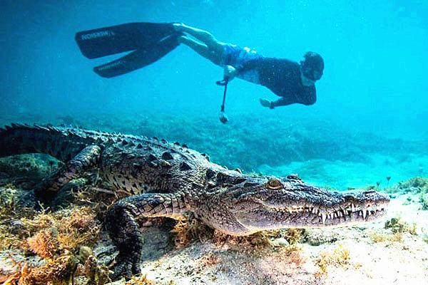 英少年古巴与鳄鱼同游庆生 不惧危险