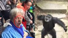 动物园看猩猩表演 却遭猩猩便便攻击
