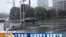 南昌:连续阴雨天 蔬菜遭了秧