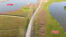 航拍鄱阳湖畔花红柳绿四月天