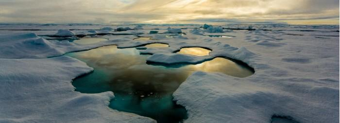 """北极冰层融化释放大量营养物或给海洋生物""""加餐"""""""