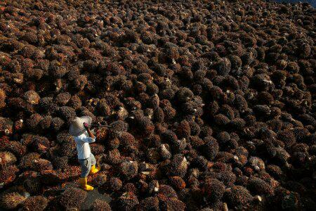 欧盟或减少进口棕榈油 马来西亚忧心出口量骤减