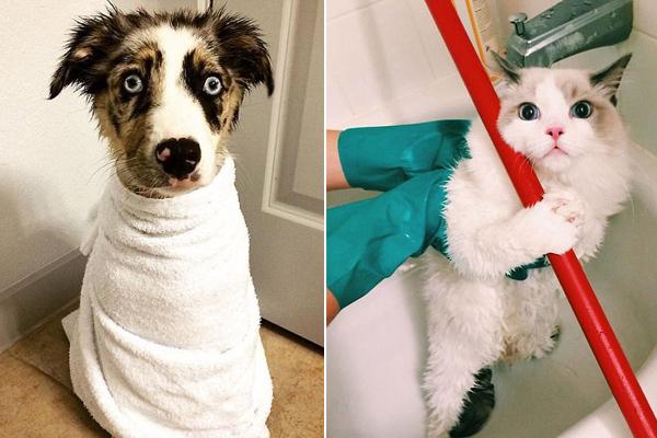 萌宠洗澡大作战 令人忍俊不禁