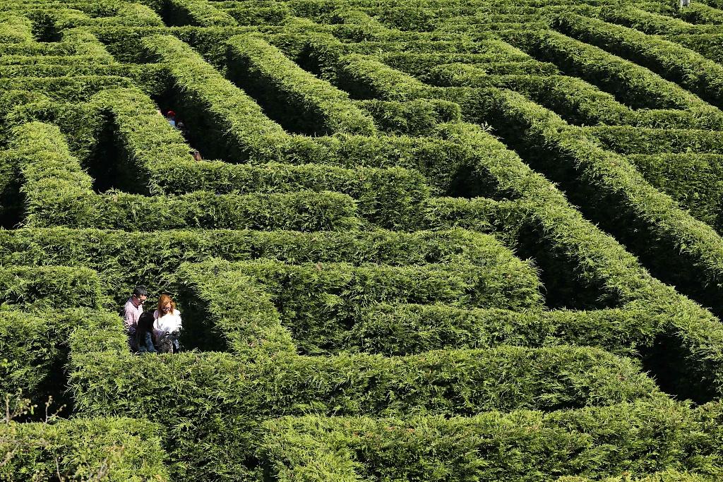 实拍西班牙最大灌木迷宫 迷失于柏树迷阵