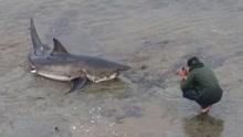 男子跳入水中在鲨鱼面前拍照