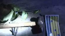 男子疑爱车被划 用铁锤砸碎13岁男孩脑壳